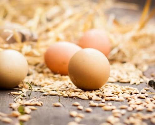 Æg fra Hegnsholt