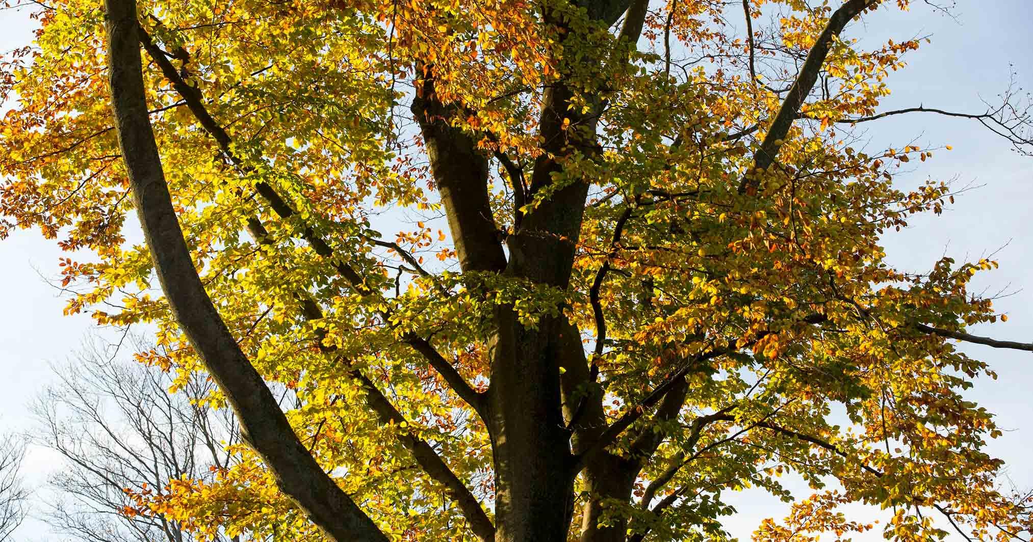Bidstrup skovene, efterår