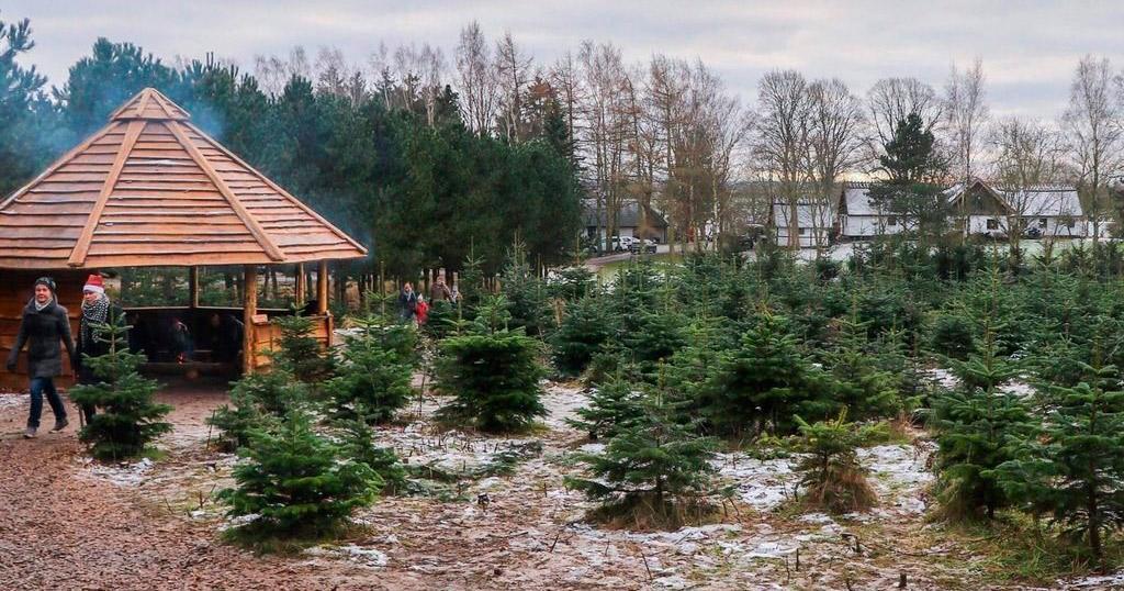 Jul på Dyssegården