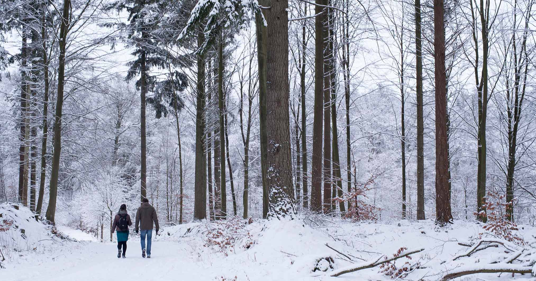 Vinter I Bidstrupskovene Foto: Ole Malling